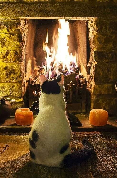 Katt myser vid brasan
