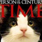 Katten som blev borgmästarekandidat