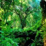 Regnskogsbedragare uteblev från rättegång