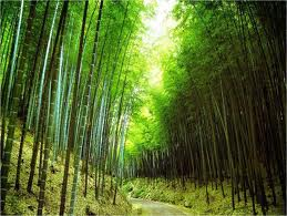Konsten att spå i Bambu