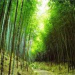 Historien står skriven … i bambu