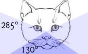 Kattens synfält