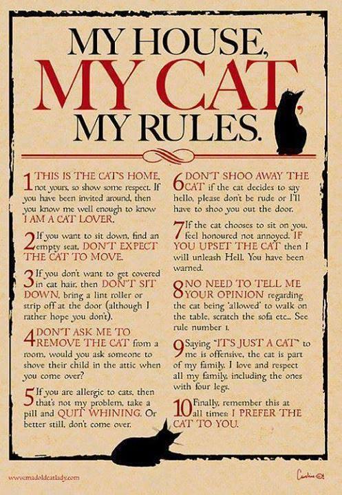 Min lya, min katt, mina regler