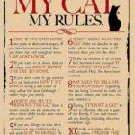 Min lya – Min katt – Mina regler